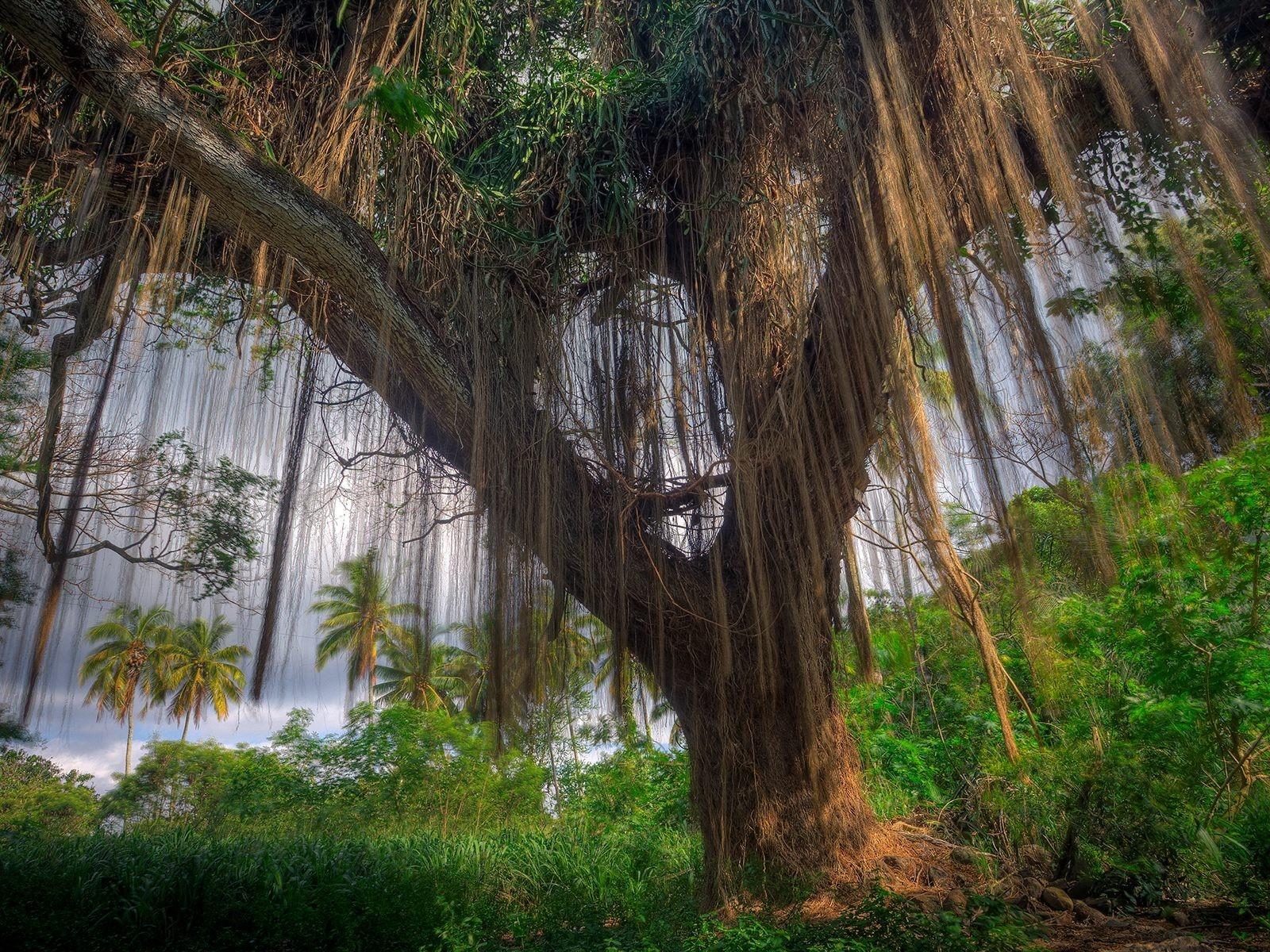 <p>Дерево большое </p>