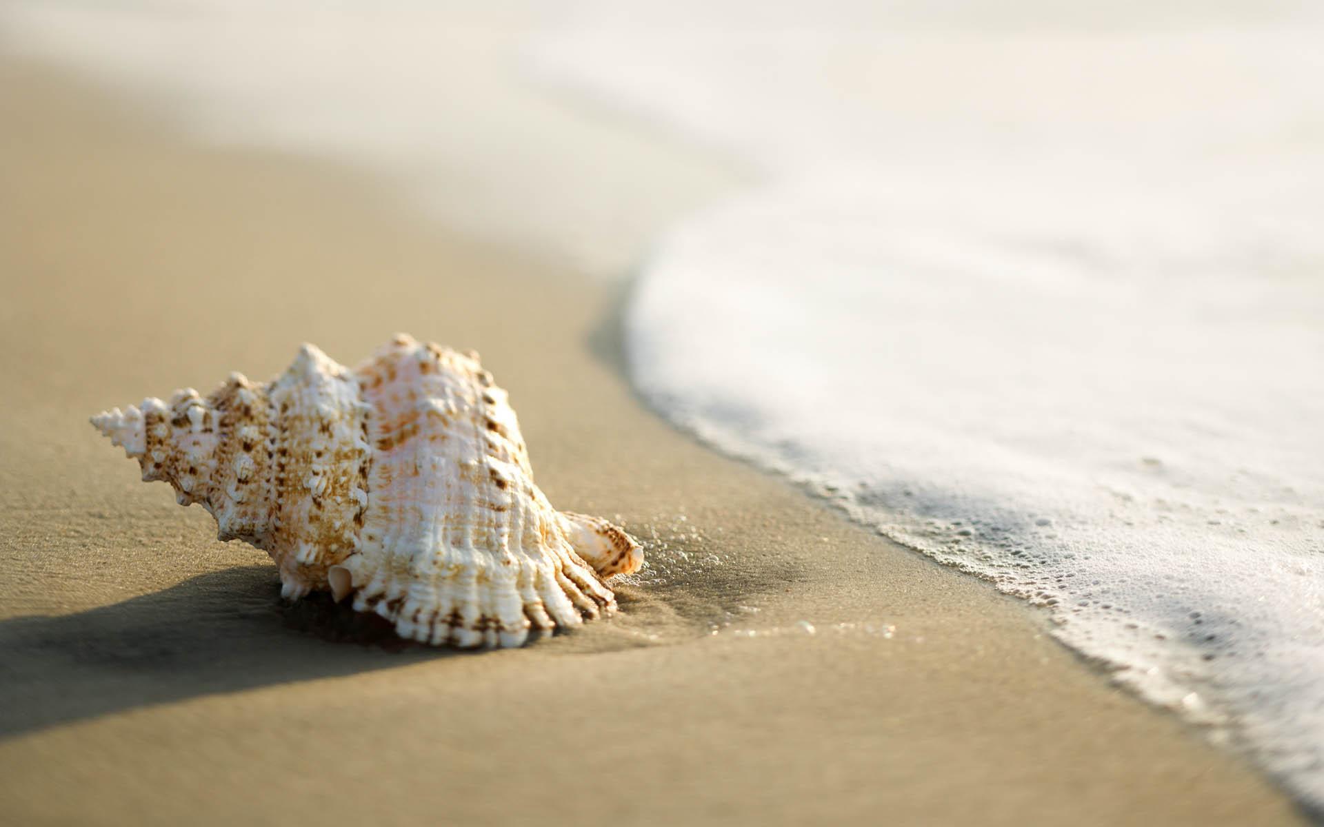 <p>Ракушки на пляже</p>