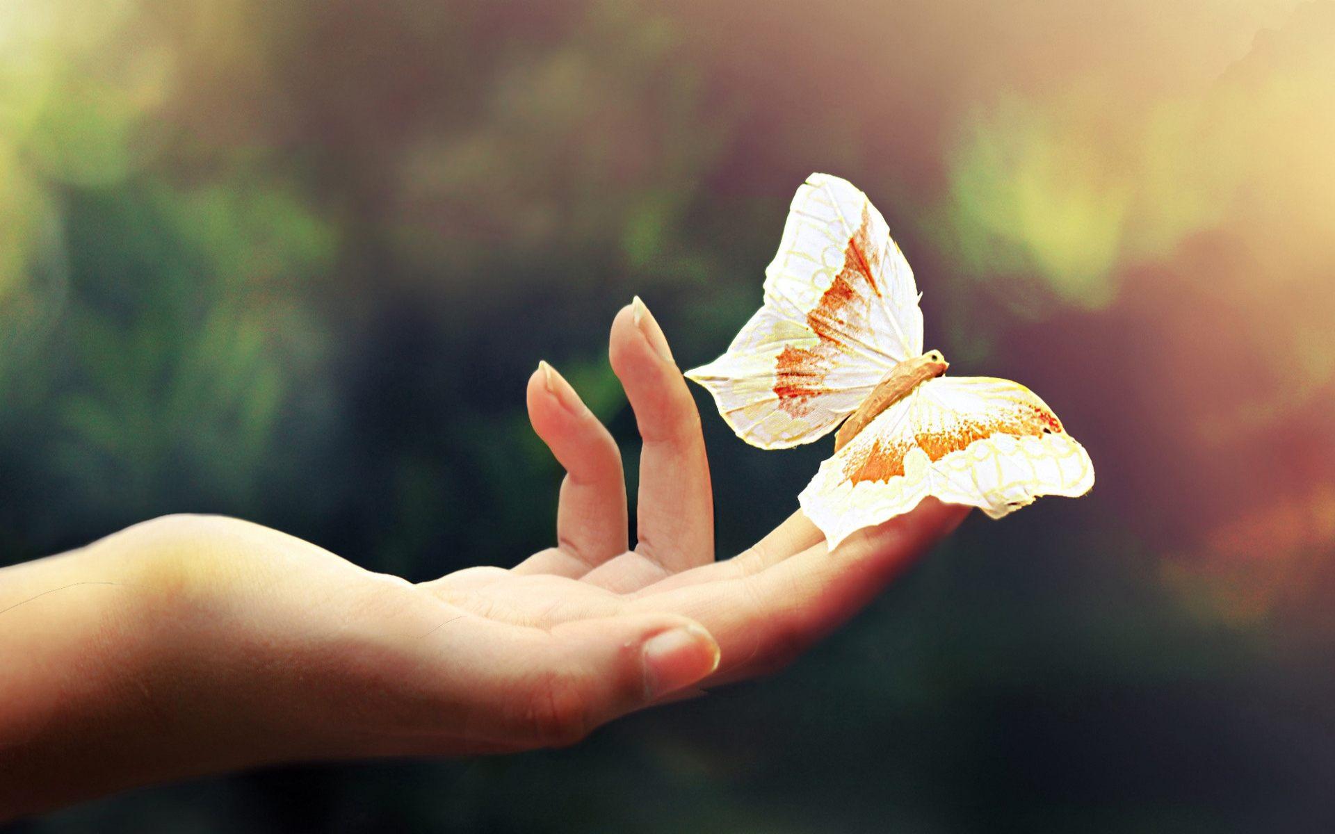 <p>Бабочка на руке</p>