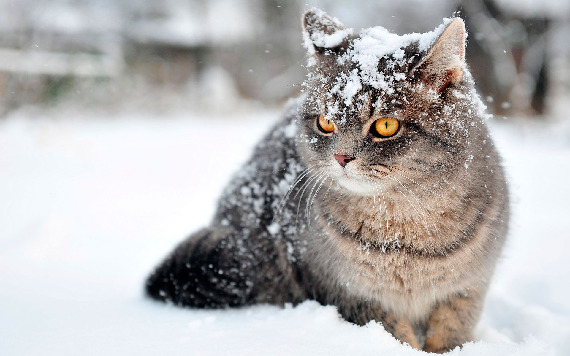 <p>Кот в снегу</p>