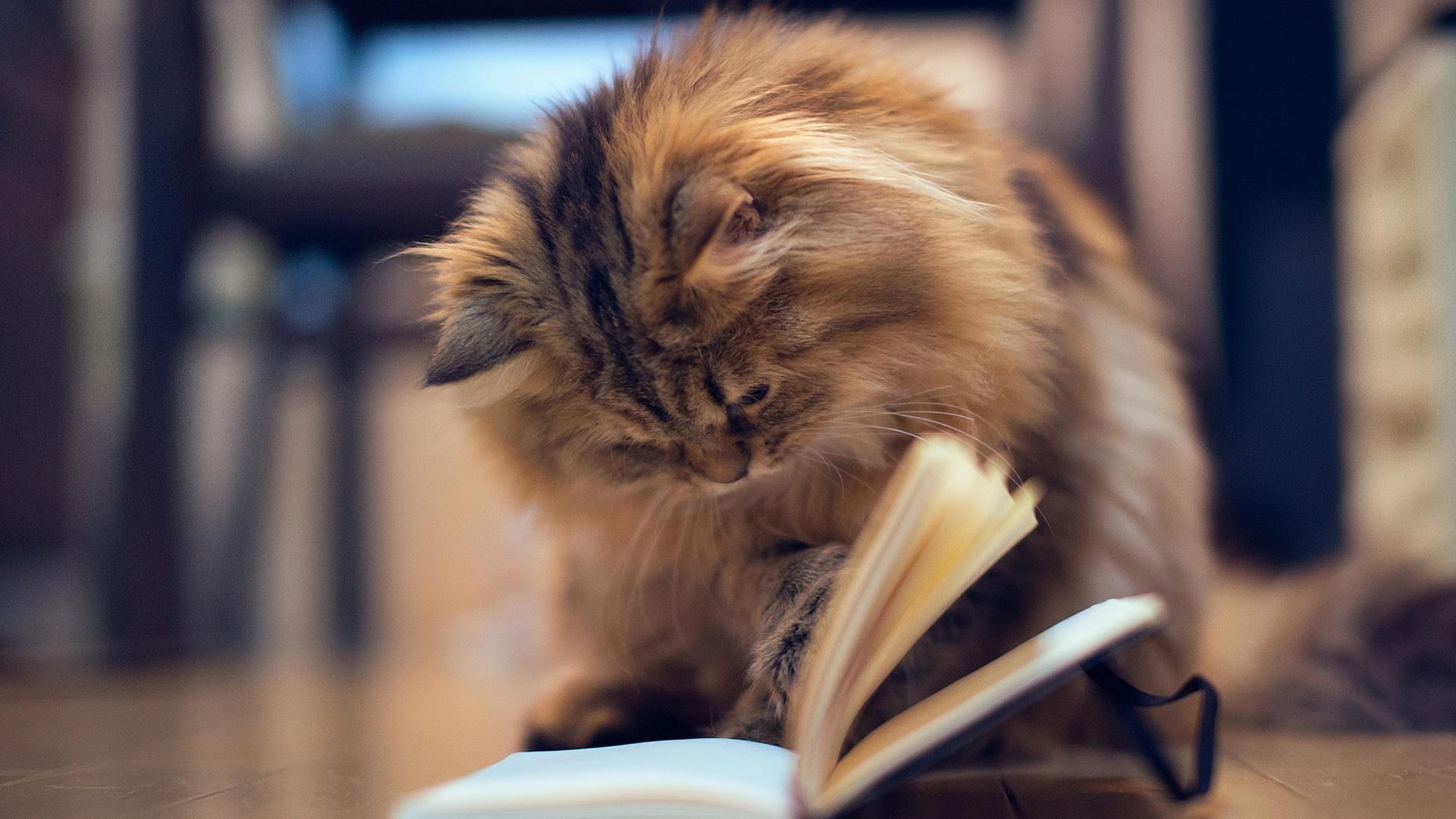<p>Кот читает</p>
