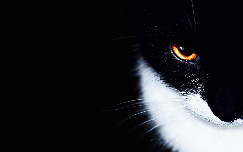 <p>Черно-белый</p>