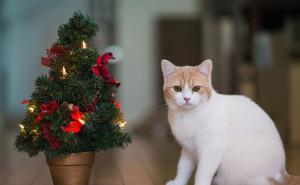 Котик под елкой Кошки на рабочий стол обои скачать высокого качества на рабочий стол новый год