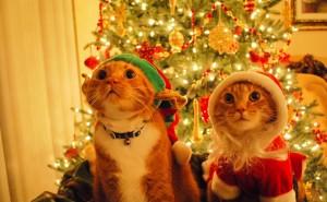 Два кота на новой год под елкой