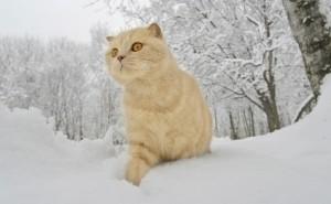 Белый кот зимой в снегу