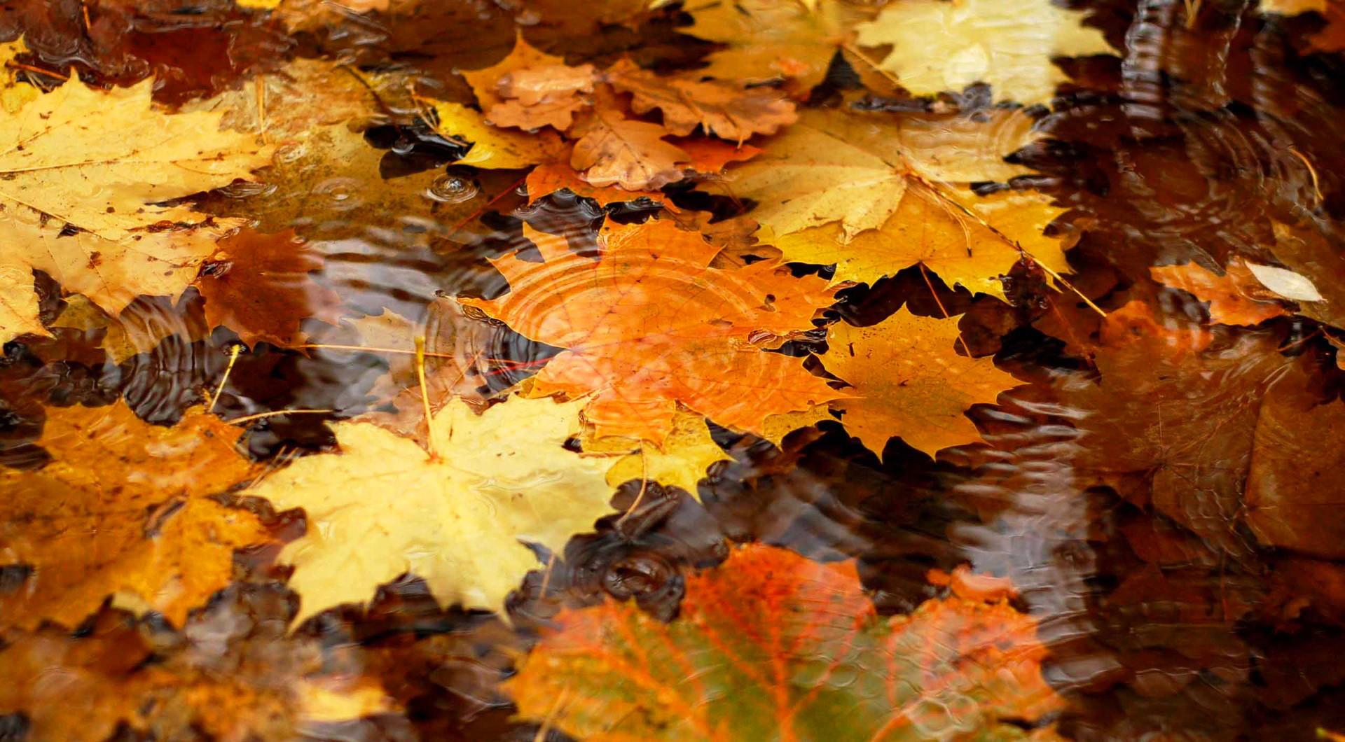 <p>Осенние листья</p>