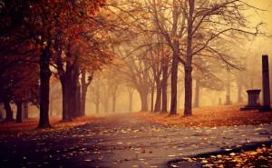 Вечер осенью в тумане