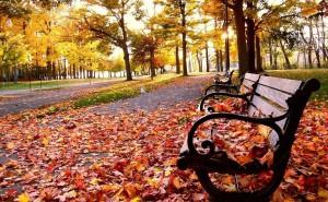 Лавочка с листьями осенью