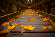 Осенние листья на мосту