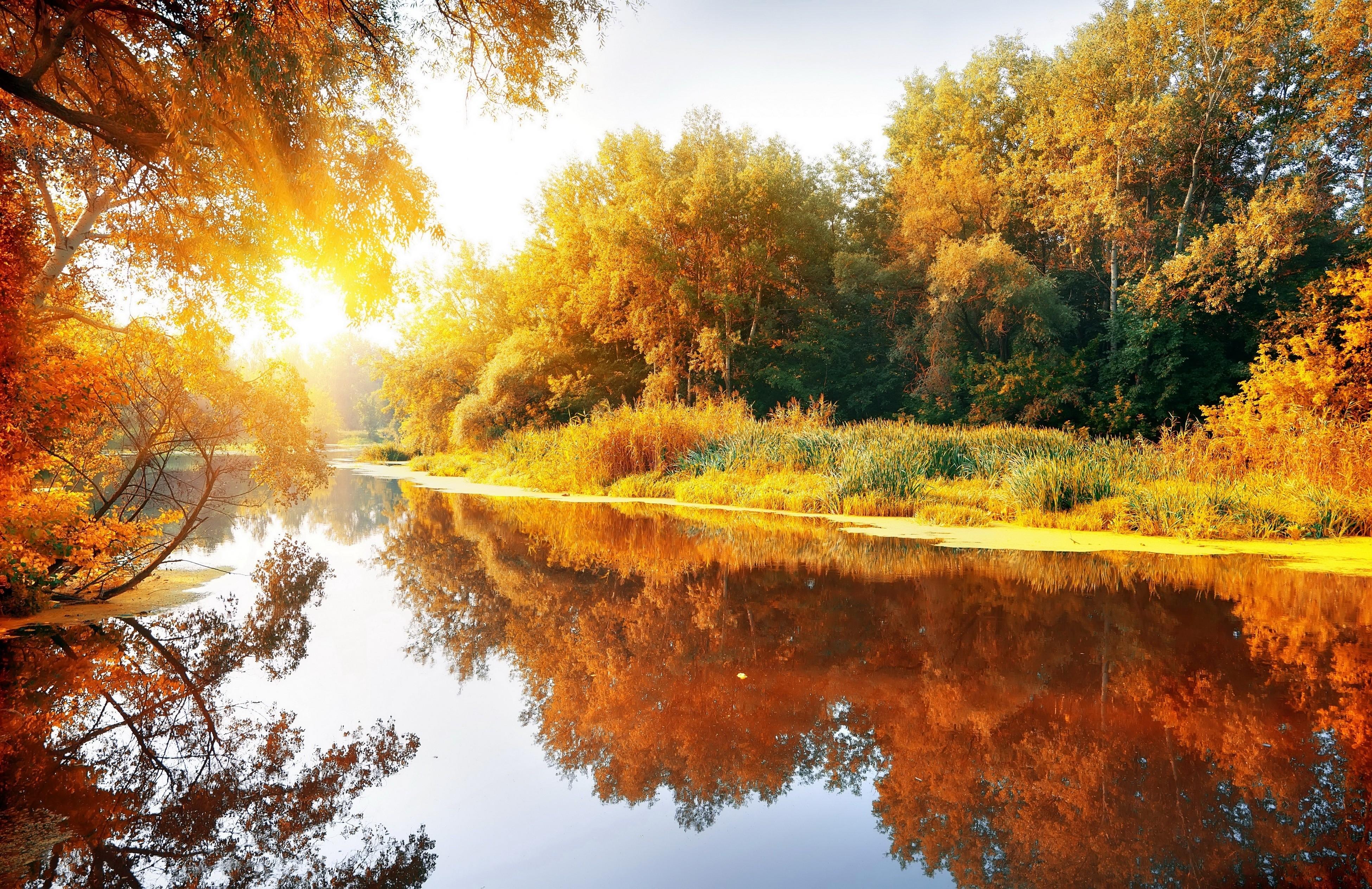 природа река солнце деревья  № 198684 бесплатно