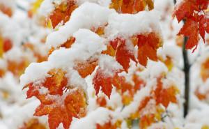 Желтые и красные листья в снегу