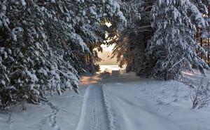 Зимняя лесная дорога