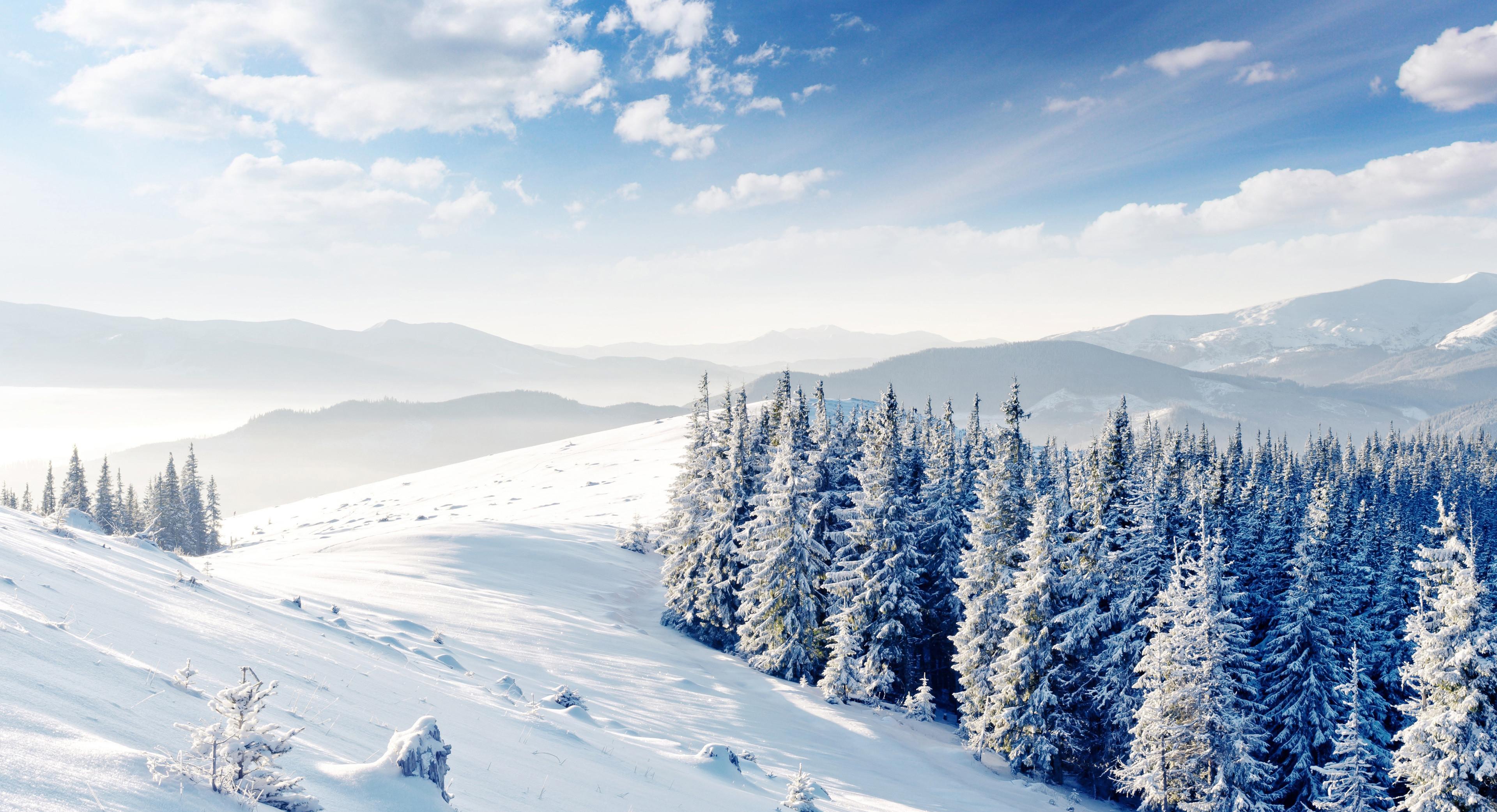 <p>Зимний лес</p>